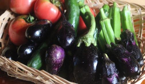160625夏野菜